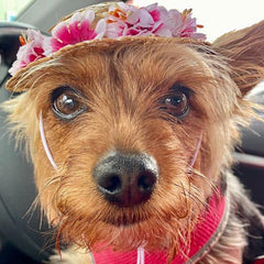 floral straw summer hat with flowers for small dogs