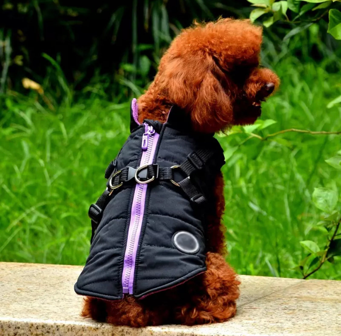 Trekker Snowdon Small Dog Coat Inbuilt Harness Black and Purple