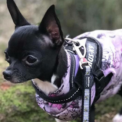 Water Resistant Padded Lilac Purple Bows Chihuahua Gilet Style Dog Coat Chihuahua Clothes and Accessories at My Chi and Me