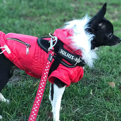 Slim Fit Designer Red Parka Small Dog Coat FINAL REDUCTION Chihuahua Clothes and Accessories at My Chi and Me
