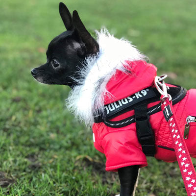 Puppy Chihuahua or Small Dog Designer Coral Red Parka Style Dog Coat