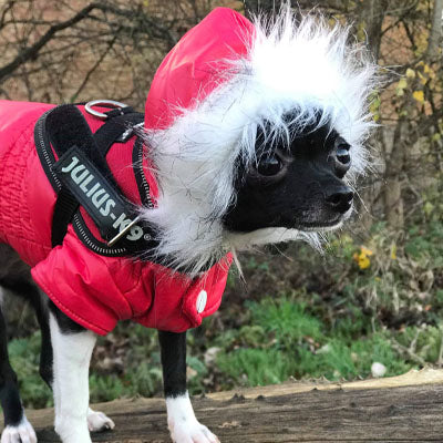 Designer Dog Coats For Small Dogs | Puppy Chihuahua Or Small Dog Designer Red Parka Style Dog Coat My