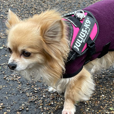 Julius K9 IDC Powerharness for Puppies and Chihuahuas Dark Pink - My Chi and Me