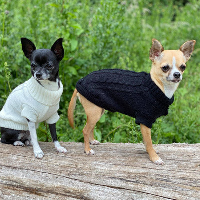 Small Dog Soft Cream Cable Knit Chihuahua Puppy Jumper 5 SIZES Chihuahua Clothes and Accessories at My Chi and Me