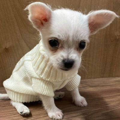 Small Dog Soft Cream Cable Jumper 6 SIZES