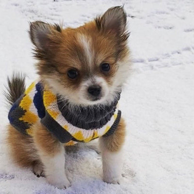 Chihuahua or Small Dog Soft ZigZag Jumper