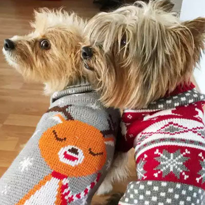 Chihuahua Puppy Chihuahua or Small Dog Red Fair Isle Christmas Jumper
