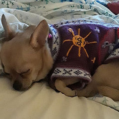 Size 4 Hand Embroidered Peruvian Dog Jumper Purple and Lilac 27cm Chihuahua Clothes and Accessories at My Chi and Me