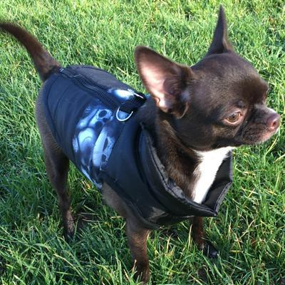 Water Resistant Padded Black Chihuahua Dog Gilet Skulls Chihuahua Clothes and Accessories at My Chi and Me