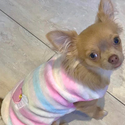 Chihuahua Puppy Fluffy Striped Vest with Heart Motif 5 SIZES Chihuahua Clothes and Accessories at My Chi and Me