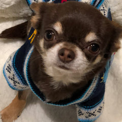 Size 4 Hand Embroidered Peruvian Dog Jumper Navy and Turquoise 26cm Chihuahua Clothes and Accessories at My Chi and Me