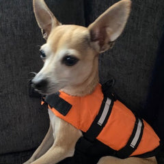 Pet Life Jacket Buoyancy Aid for Chihuahuas or Small Dogs Blue Chihuahua Clothes and Accessories at My Chi and Me
