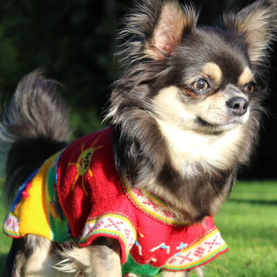 Size 5 Hand Embroidered Peruvian Dog Jumper Red Yellow Blue and Green 27cm