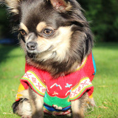 Size 6 Hand Embroidered Peruvian Dog Jumper Red Yellow Blue and Green 27cm
