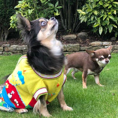 Size 8 Hand Embroidered Peruvian Dog Jumper Sunshine Yellow 36cm