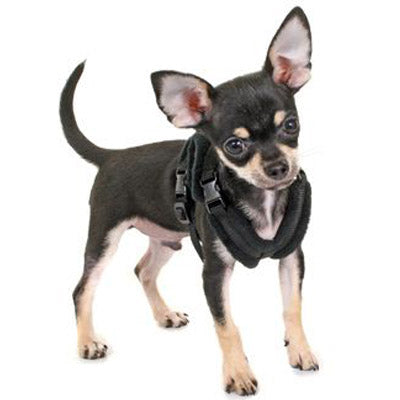 Tiny PerfectFit Harness Chihuahua Puppies 24-30cm Chest