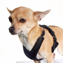 Tiny PerfectFit Complete Harness 3-6 for Medium Chihuahuas and Toy Breeds 34-40cm Chest 9 COLOURS Chihuahua Clothes and Accessories at My Chi and Me