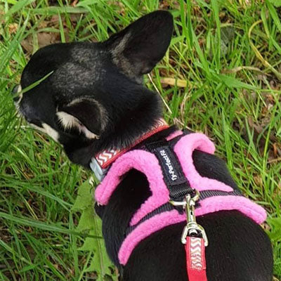 Tiny PerfectFit Complete Harness 3-6 for Medium Chihuahuas and Toy Breeds 34-40cm Chest 8 COLOURS