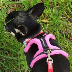 Tiny PerfectFit Complete Harness 3-6 for Medium Chihuahuas and Toy Breeds 34-40cm Chest 8 COLOURS Chihuahua Clothes and Accessories at My Chi and Me