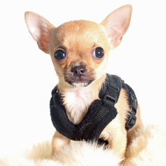 Tiny PerfectFit Complete Harness 1-2 for Chihuahua Puppies and Tiny Chihuahuas 24-30cm Chest 8 COLOURS Chihuahua Clothes and Accessories at My Chi and Me