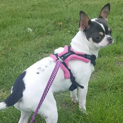 Tiny PerfectFit Complete Harness 1-4 for Adult Chihuahuas 28-36cm Chest 9 COLOURS Chihuahua Clothes and Accessories at My Chi and Me