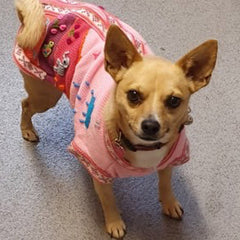 Size 6 Hand Embroidered Peruvian Dog Jumper Candy Pink 34cm Chihuahua Clothes and Accessories at My Chi and Me