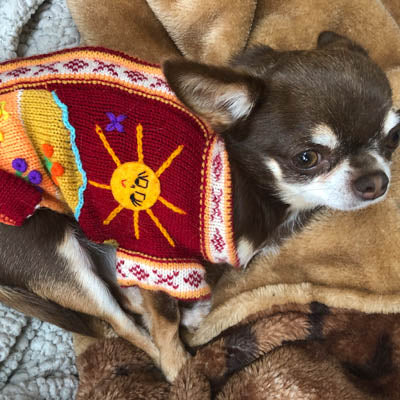 Size 4 Hand Embroidered Peruvian Dog Jumper Deep Red, Peach and Burnt Orange 28cm Chihuahua Clothes and Accessories at My Chi and Me