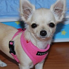 Puppia Soft Mesh Chihuahua Small Dog Harness A Pink 3 Sizes Chihuahua Clothes and Accessories at My Chi and Me