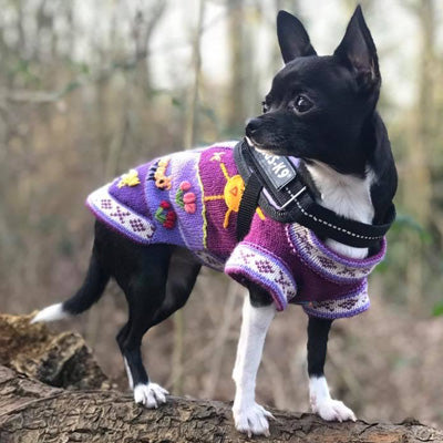 Size 2 Hand Embroidered Peruvian Dog Jumper Purple 22cm