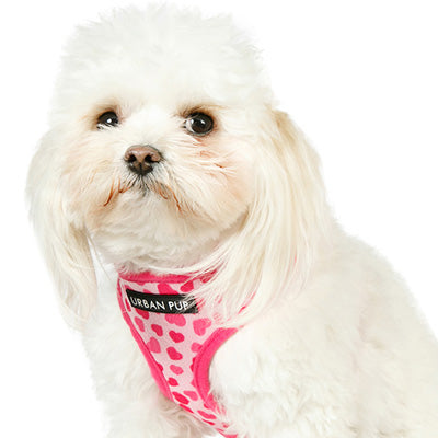 Pink Hearts Harness by Urban Pup Chihuahua Clothes and Accessories at My Chi and Me