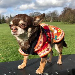 Size 2 Hand Embroidered Peruvian Dog Jumper Deep Red, Peach and Burnt Orange 25cm Chihuahua Clothes and Accessories at My Chi and Me