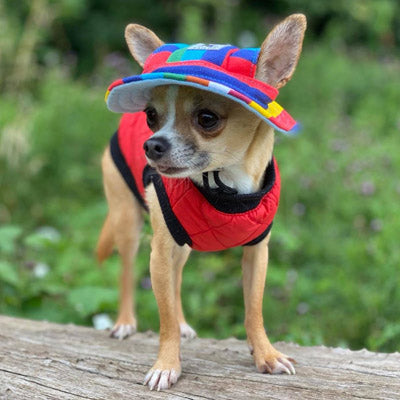 Water Resistant Padded Quilted Red Dog Gilet Chihuahua Clothes and Accessories at My Chi and Me