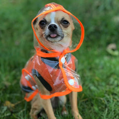 Orange Edged Waterproof Raincoat for Chihuahuas and Small Dogs - 4 SIZES