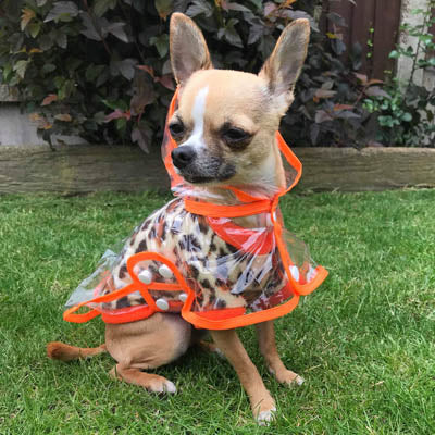 Chihuahua Apparel | Collars Harnesses Leads Accessories - My