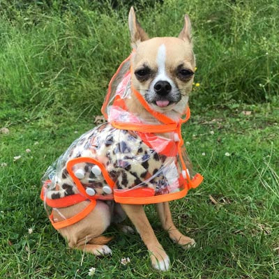Orange Waterproof Raincoat for Chihuahuas and Small Dogs - 3 SIZES Chihuahua Clothes and Accessories at My Chi and Me