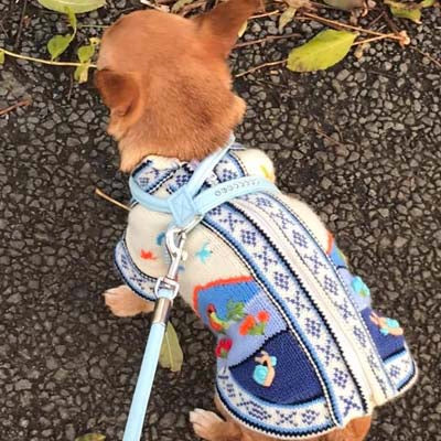 Size 3X Hand Embroidered Peruvian Dog Jumper Mid Blue and White 27cm Chihuahua Clothes and Accessories at My Chi and Me