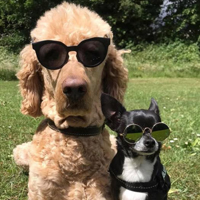 Large Sunglasses for Medium Sized Dogs Black or Mirrored