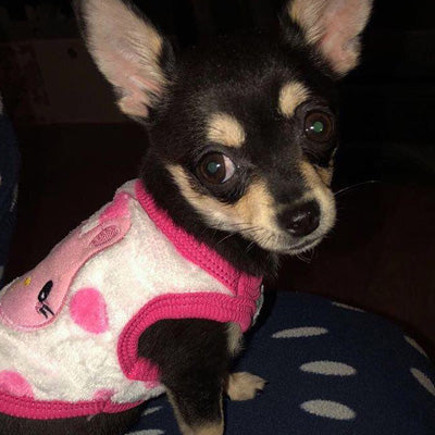 Chihuahua Puppy Fluffy Pink Spot Vest with Bunny Motif Chihuahua Clothes and Accessories at My Chi and Me
