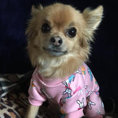 Chihuahua Puppies and Small Chihuahua Pyjamas Onesie Style Bunny Print Cotton Pink Premium Quality - My Chi and Me