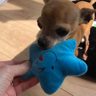 Twinkle Chihuahua or Small Dog Plush Star Toy with Squeaker Blue Chihuahua Clothes and Accessories at My Chi and Me