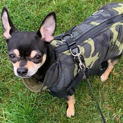 Trekker Water Resistant Padded Chihuahua Dog Coat with Inbuilt Harness Green Camouflage Chihuahua Clothes and Accessories at My Chi and Me