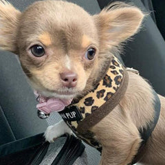 Leopard Print Harness by Urban Pup Chihuahua Clothes and Accessories at My Chi and Me