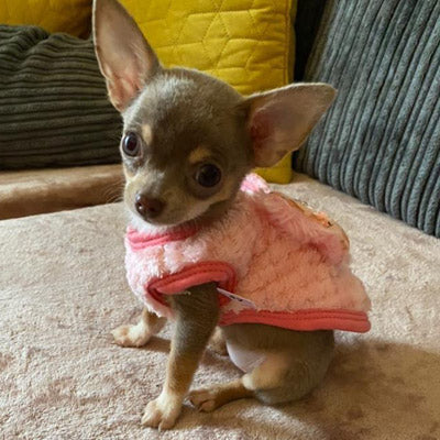 Chihuahua Puppy Fluffy Jumper Daisy Chain and Diamante Cherry Bow Pink