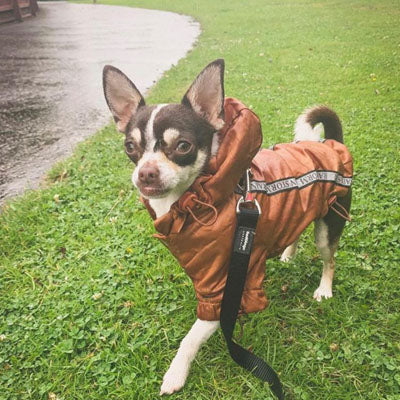 Urban Pup Chihuahua Puppy Chihuahua or Small Dog Coat Bronze Rainstorm Jacket Chihuahua Clothes and Accessories at My Chi and Me