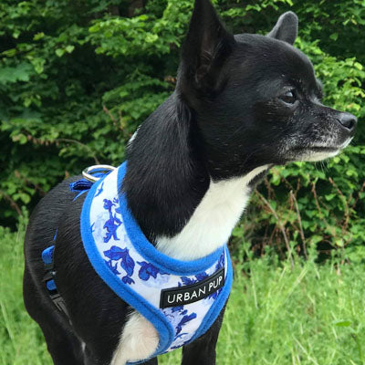 Blue and White Floral Bouquet Harness by Urban Pup Chihuahua Clothes and Accessories at My Chi and Me