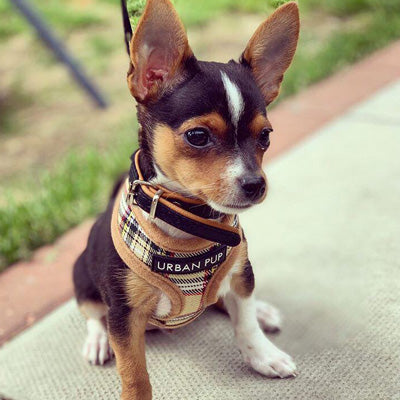Brown Tartan Harness by Urban Pup Chihuahua Clothes and Accessories at My Chi and Me