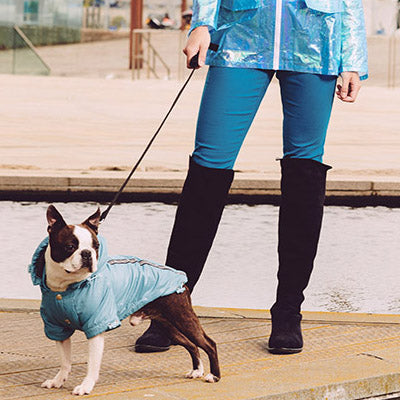 Urban Pup Chihuahua Puppy Chihuahua or Small Dog Coat Teal Rainstorm Jacket Chihuahua Clothes and Accessories at My Chi and Me