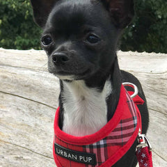 Red Tartan Harness by Urban Pup