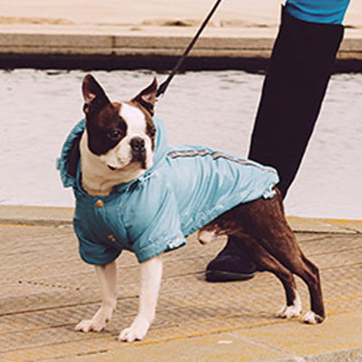 Urban Pup Chihuahua Puppy Chihuahua or Small Dog Coat Teal Rainstorm Jacket