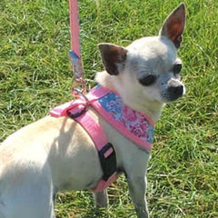 Vintage Rose Floral Bouquet Harness by Urban Pup Chihuahua Clothes and Accessories at My Chi and Me